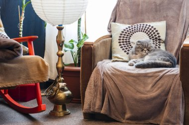 Retro interior composition with a sleeping Scottish fold cat on armchair next to ancient lamp and a rocking chair