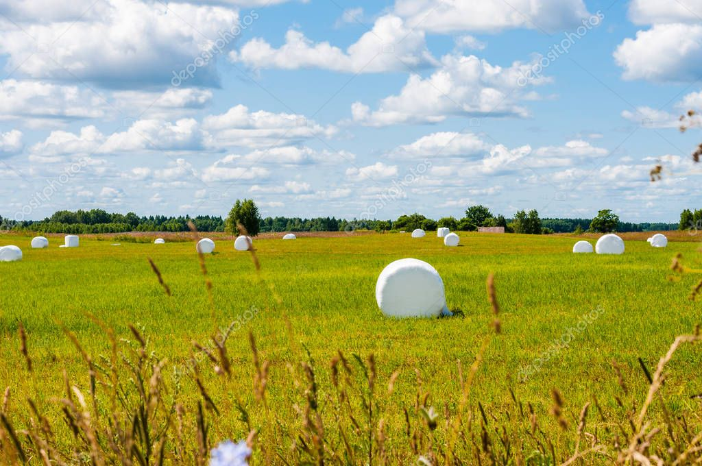 Many white sacks of mown and packed hay laid out on the green field surrounded by scenic nature landscape