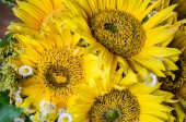 Mulltilobe yellow sunflower with small white daisy in a bouquet.