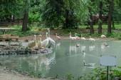 Fényképek Pelikánok és a flamingók a tó névtábla a