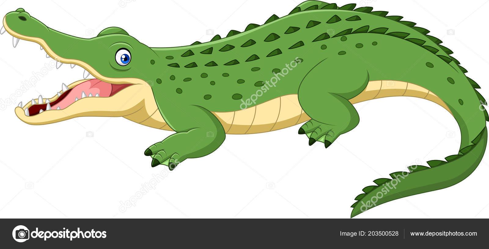 Crocodile dessin anim isol sur fond blanc image vectorielle tigatelu 203500528 - Dessin anime les crocodiles ...