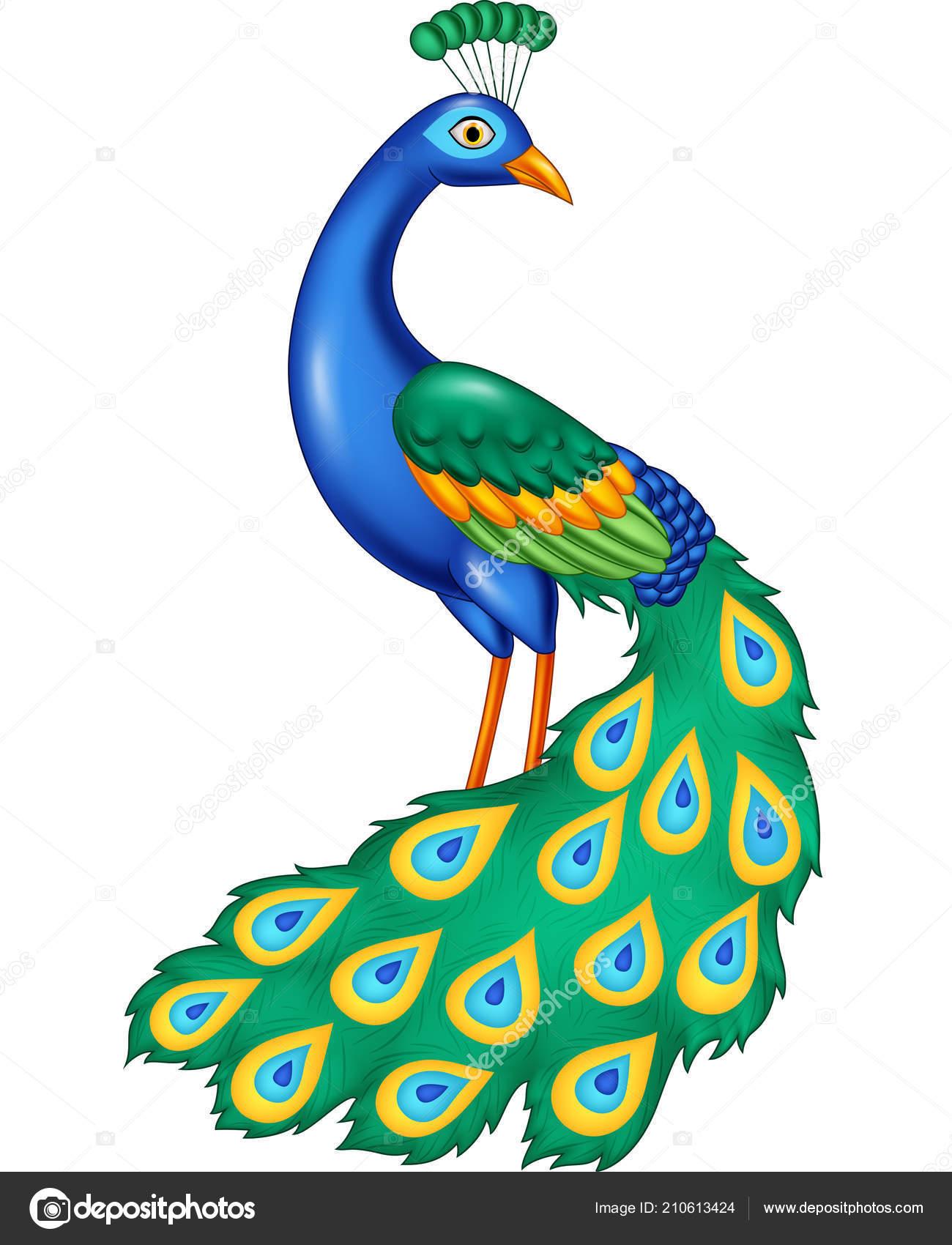 Vector Illustration Cartoon Beautiful Peacock Stock Vector