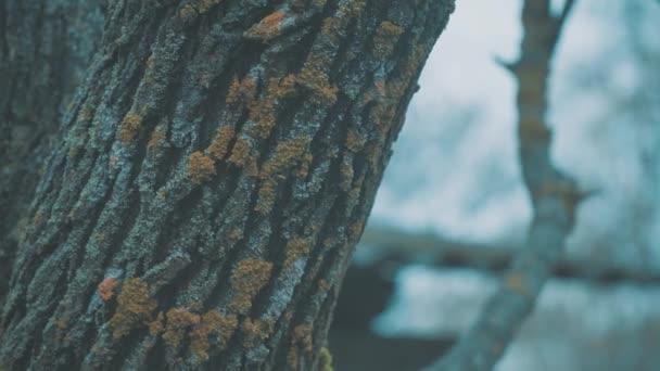 přírodní pozadí krajiny přirozené textury modrá Les