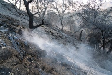 Aftermath of Thomas Fire on Highway 150. Burned hillside and natural oil seeps still smoking.