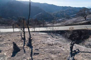 Burned landscape along Highway 150 near Lake Casitas. Aftermath of Thomas Fire.