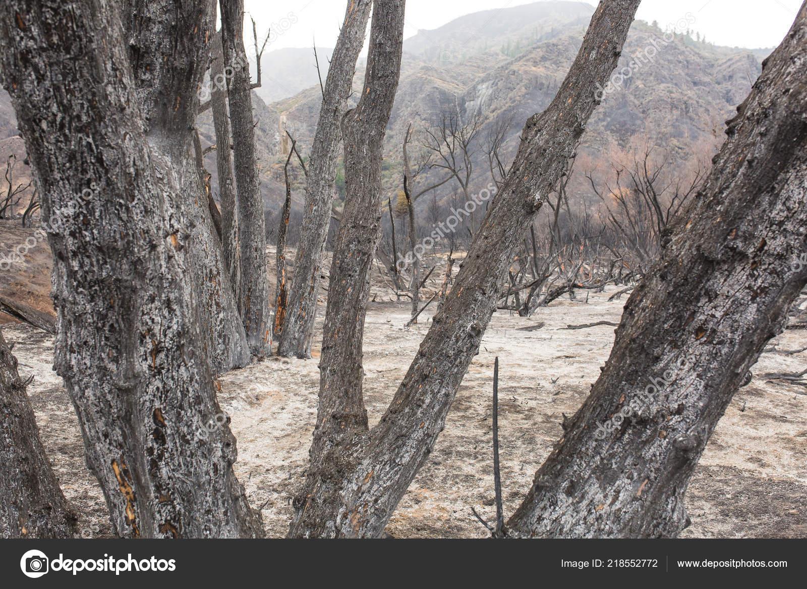 Rose Valley Campground Damaged Thomas Fire Highway Ojai