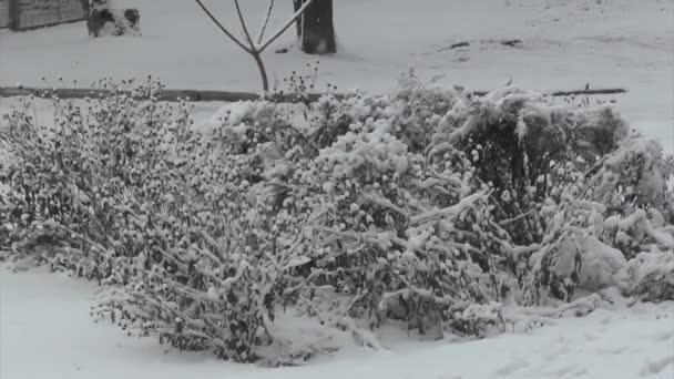 Hóval borított bush előtt kék ég, széles szög kilátás
