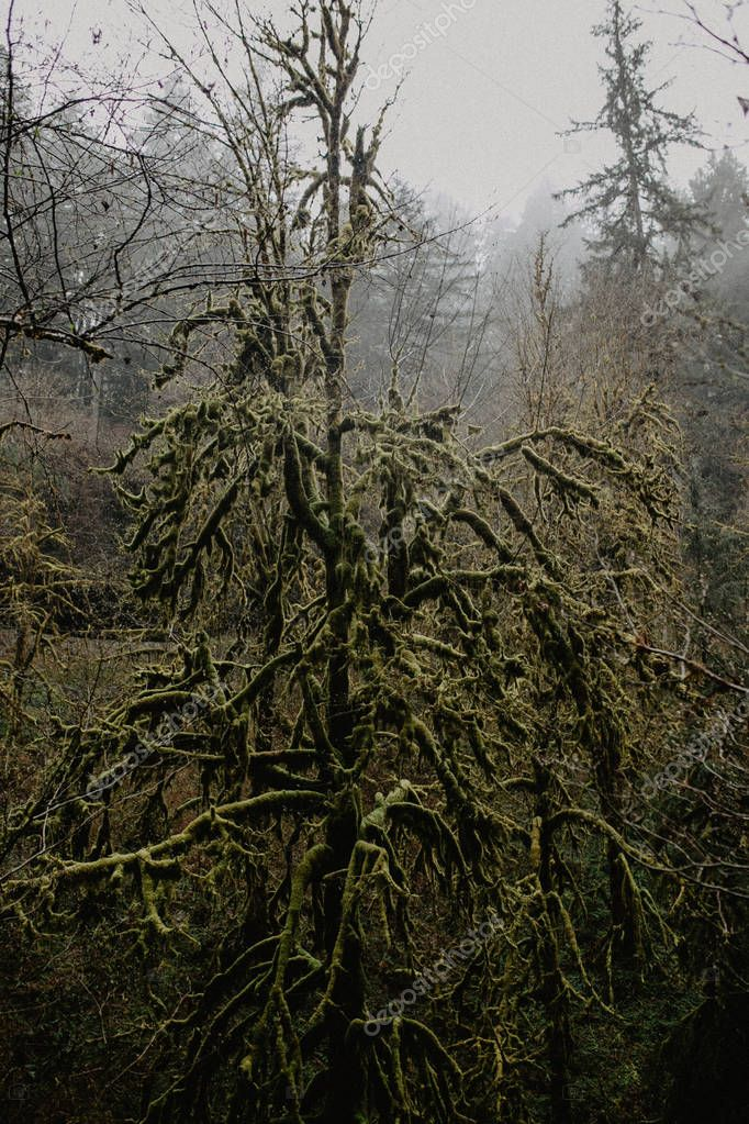 green moss covered tree in fairy tale dense forest