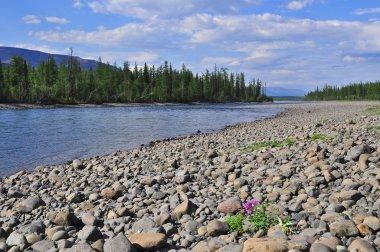 River Muksun, the Putorana plateau. Summer water landscape in Taimyr, Siberia, Russia.