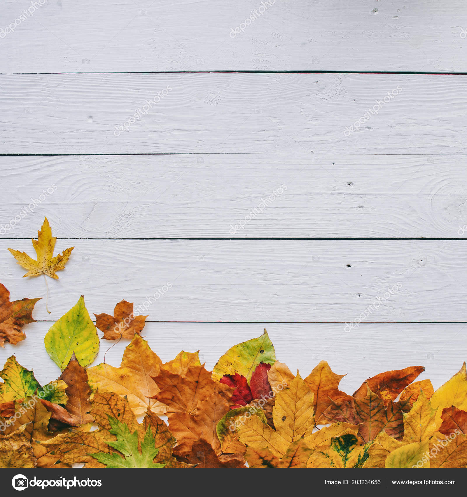 Colorful Autumn Dry Leaves Border Frame White Painted Rustic