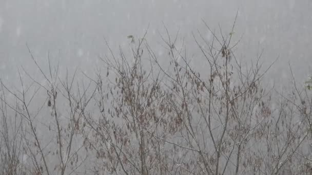 Snowing over tree branches, cold weather close to the holidays