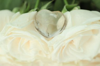 Natural clear quartz in the shape of a heart lies on white roses. Chakra. Reiki. Wedding