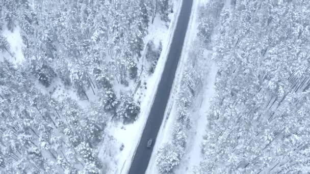let na sondu přes úzkou asfaltovou silnici v zasněžené borovém lese v zimě