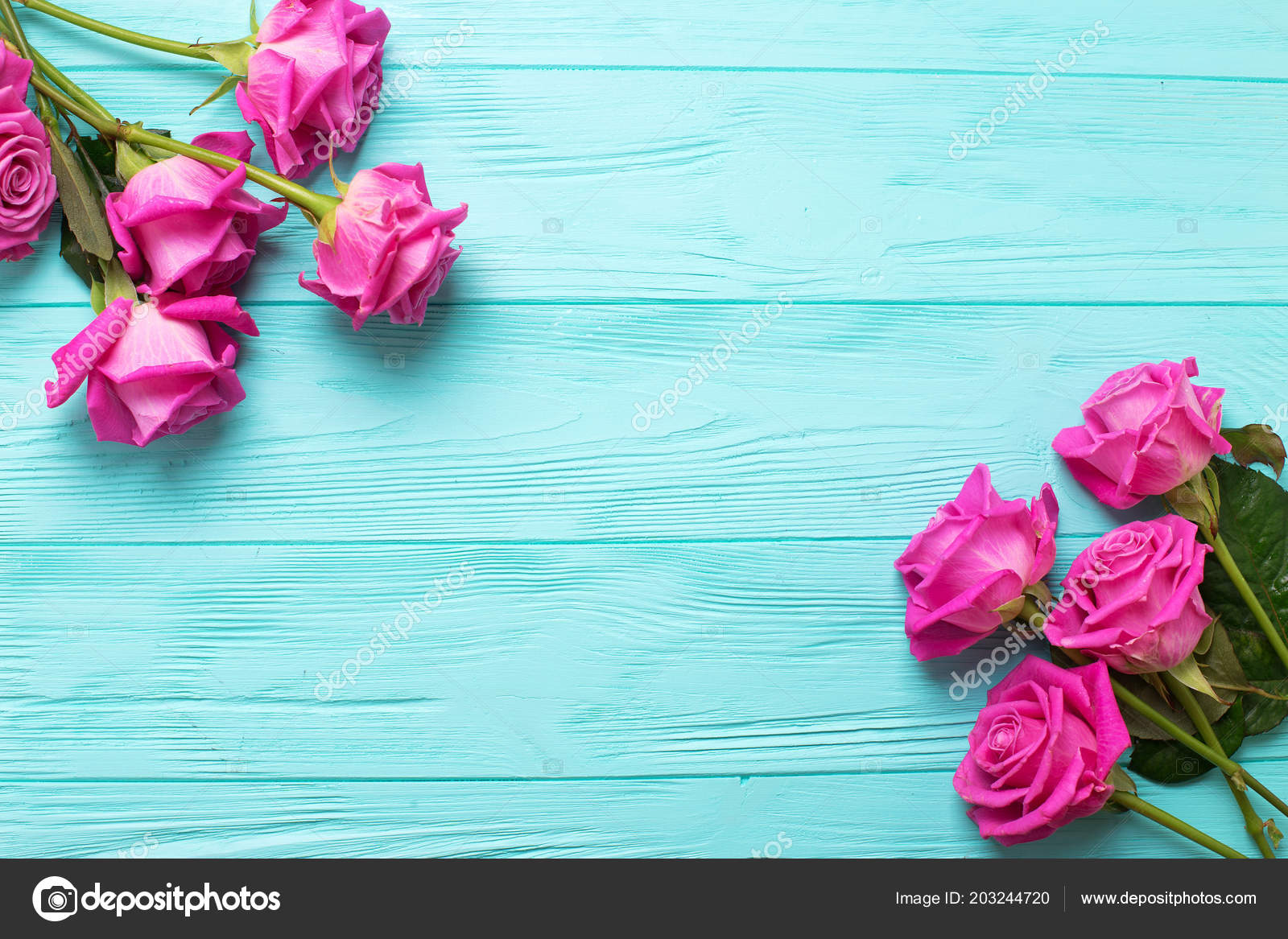 Border Pink Roses Flowers Teal Color Wooden Background Stock Photo