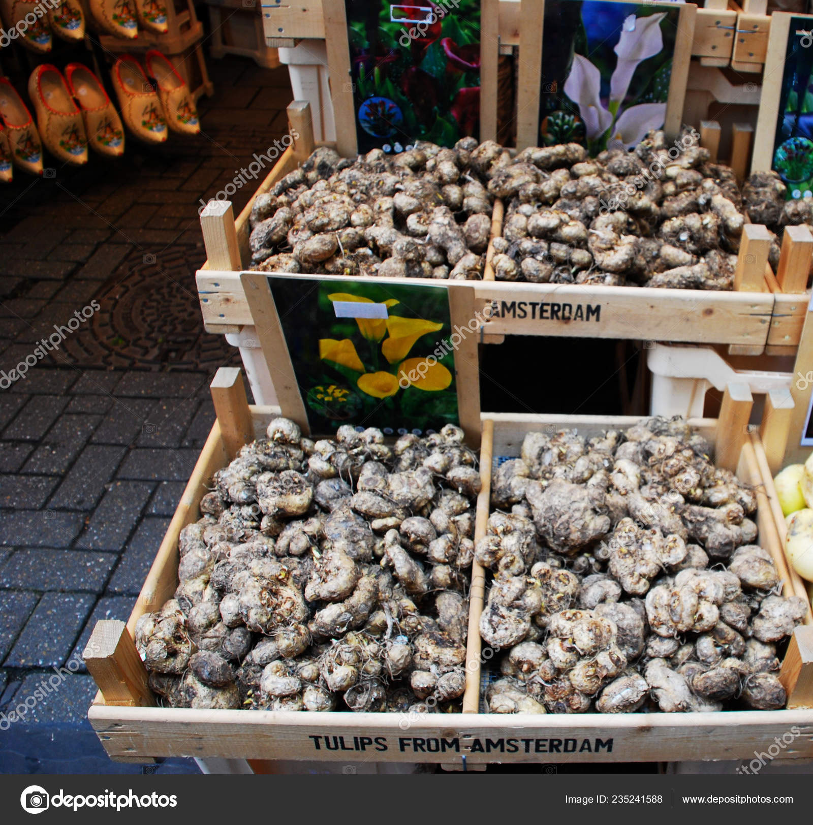 Sale Tulips Seeds Flower Market Amsterdam Traditional Clogs