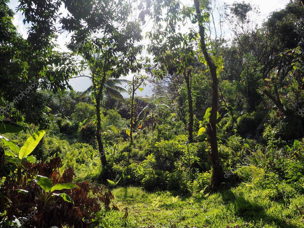 Tropical forest in a sunbath