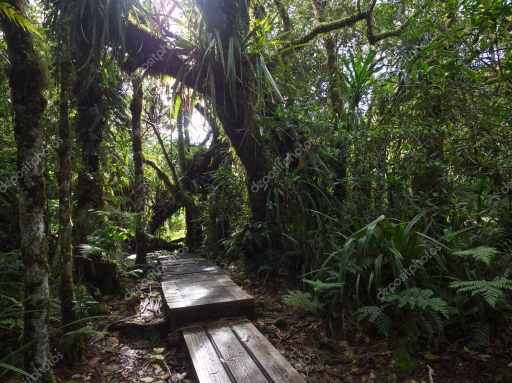 A path in the primal forest in Reunion tropical Island