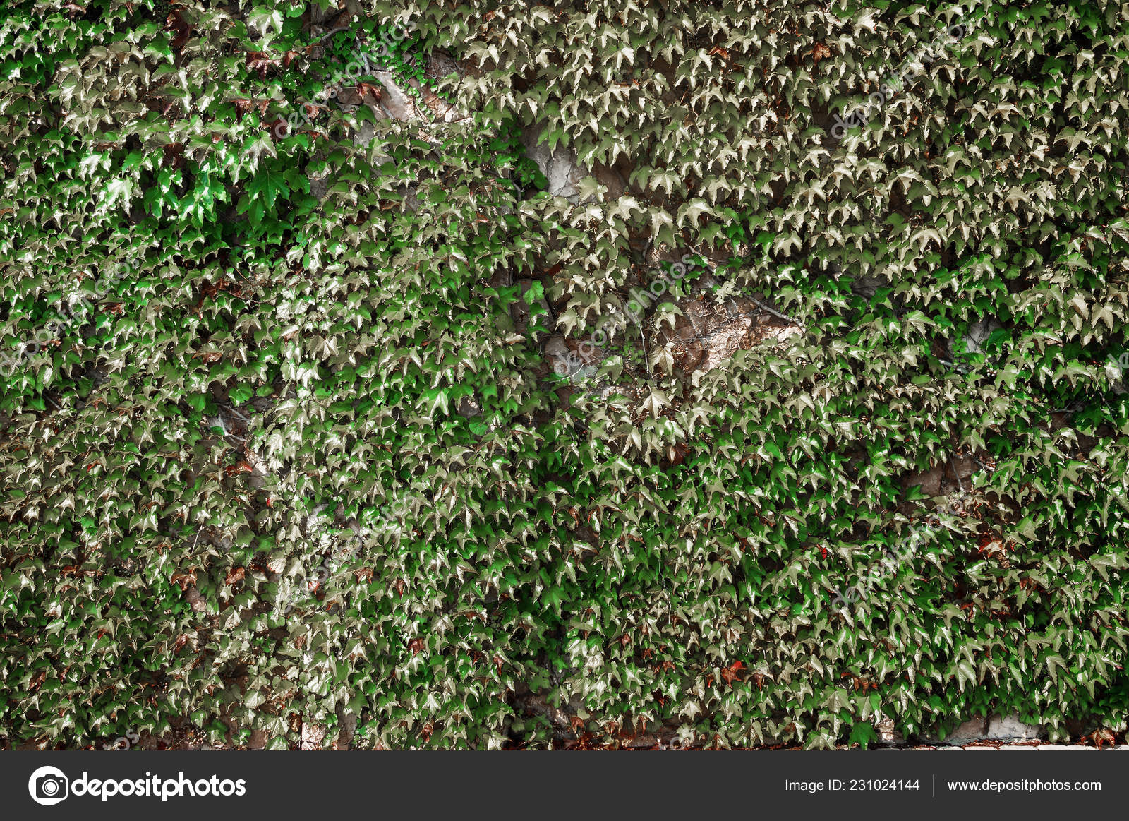 Fence Green Space Stone Climbing Plants Stock Photo C Chingis61