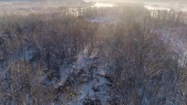 Letecký výhled: Let nad zimním lesem. Sněhem pokryté stromy. Krásný východ slunce. Vesnice u řeky. Mrazivé počasí. Zimní krajina, příroda, sluneční paprsky. Cestovní sezóna. Mlha nad zimní řekou