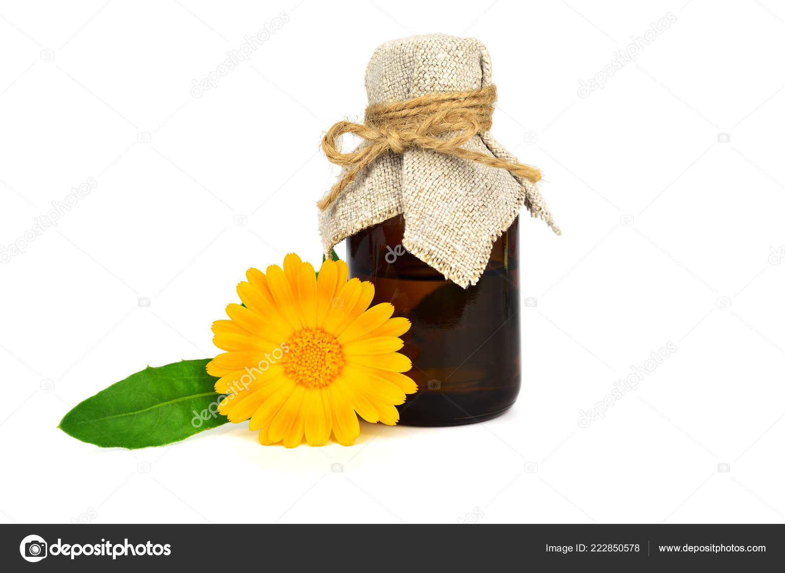 Common Marigold Flower (Calendula Officinalis) Tincture Extract or Essential Oil. Isolated on White Background. Also Ruddles, Pot or Scotch Marigold.