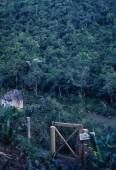 Pryč, plavání, Belize, panoramatické deštného pralesa