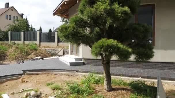 Bonsai borovice. Zahradní architektury