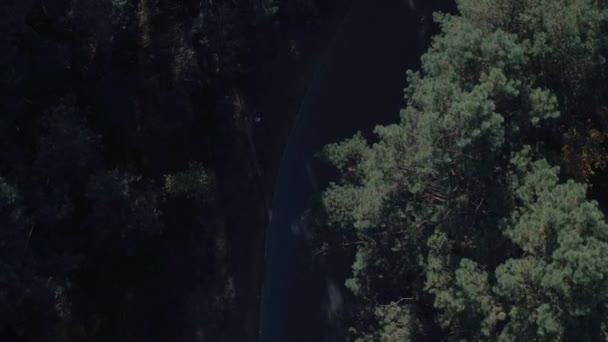Letecký pohled shora na lesní cestě. Pohled shora borovic v létě. Letecké fotografování les na den