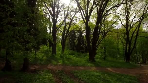 Letecké Střílečky dubu na jaře. Lesní cesty, lesní stezka, kamenné dlážděné cesty, tráva. Letecký pohled na Park