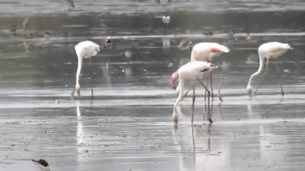 Gyapjú-ból vadon élő madarak ivás