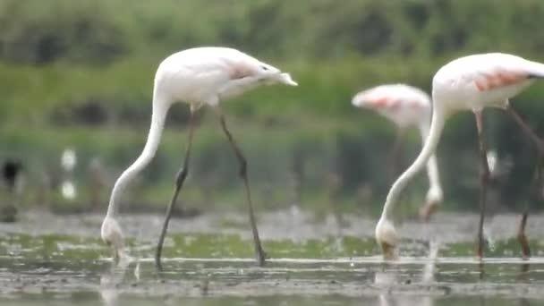 Un uccello Flamingos Wildlife
