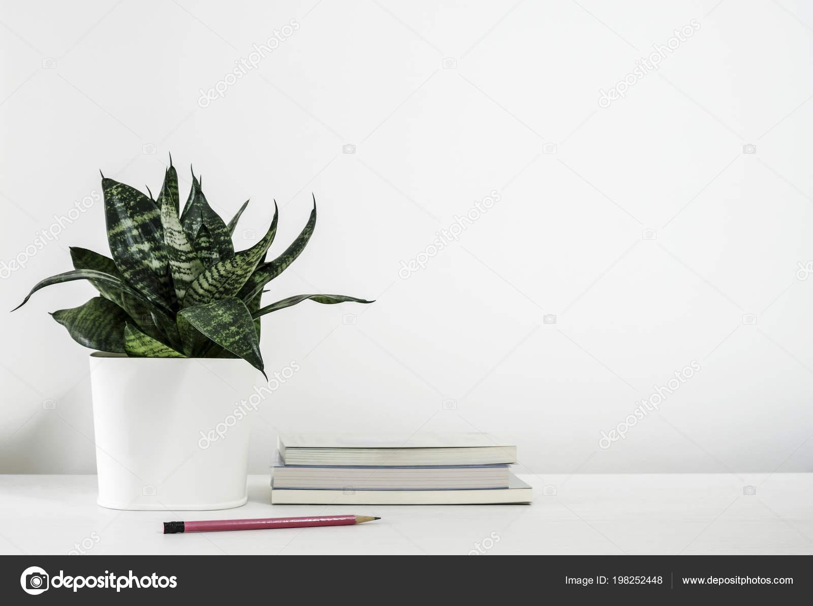 Sansevieria Trifasciata Snake Plant Pot Book Pencil White Wooden Table Stock Photo C Myimagine 198252448