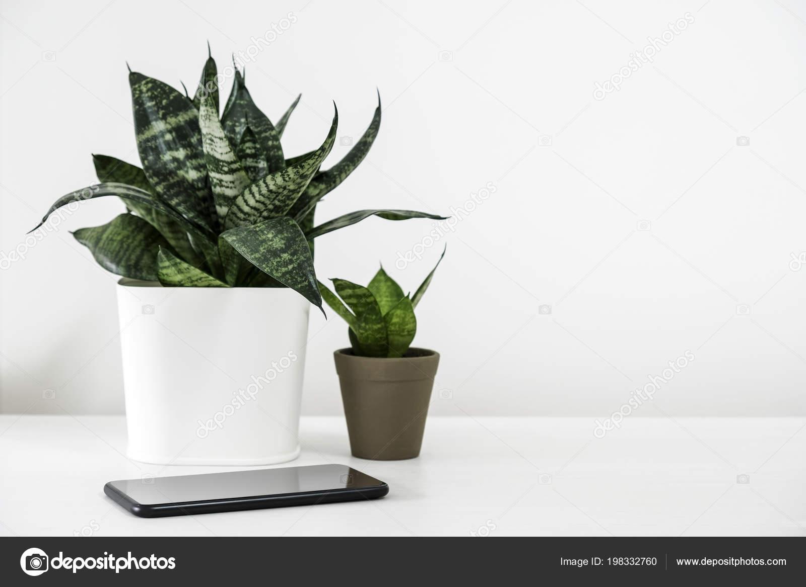 Sansevieria Trifasciata Snake Plant Pot Mobile Phone White Wooden Table Stock Photo C Myimagine 198332760