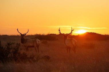 Silhouette of deer on beautiful sky background stock vector
