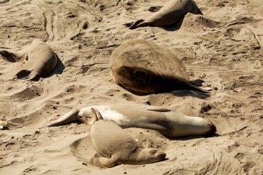 fur seal on the ocean