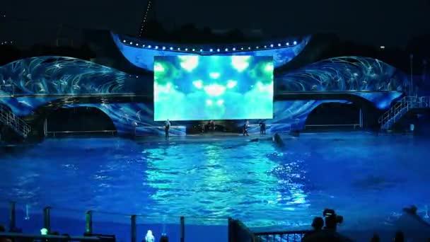 Skvělý skok velryb v Shamu oslava světlo nahoře v Shamu oslava světlo vzhůru v noci v moři (1