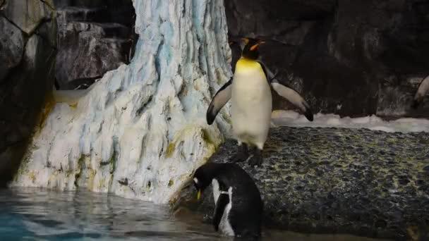 Orlando, Florida. Július 08, 2019. Pingvin gyaloglás az Antarktisz területén SeaWorld 1.