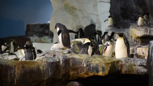 Orlando, Florida. Július 08, 2019. Penguin gyaloglás és a mozgó szárnyak az Antarktiszon területén a SeaWorld