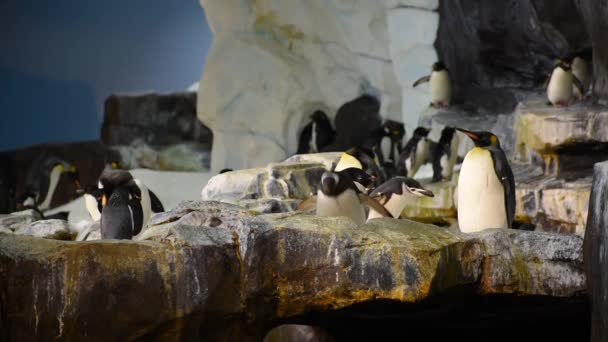 Orlando, Florida. 08. červenec 2019. Penguin, zatímco další skoky v oblasti Antarktidy.