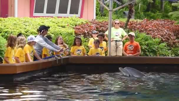 Orlando, Florida. 12. července 2019. v Seawordu. Letní tábor dětem pozdrav delfína v Seawordu.