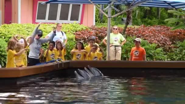 Orlando, Florida. 12. července 2019. Letní tábor pro děti s delfíny v Seawordu.