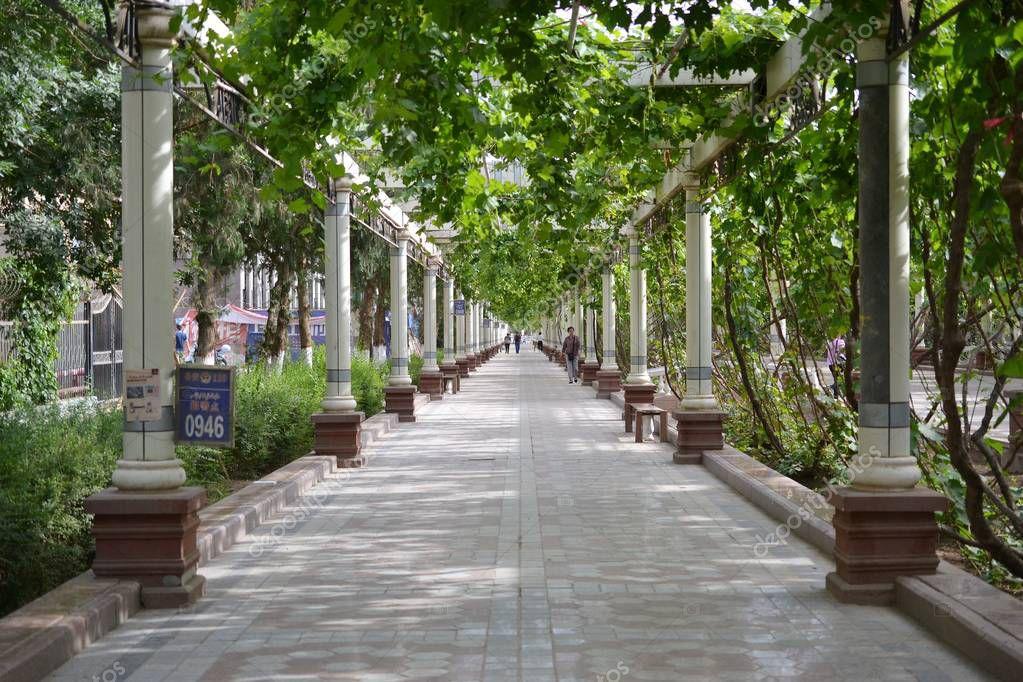 Street with pillars and grape plants in Turpan Xinjiang,