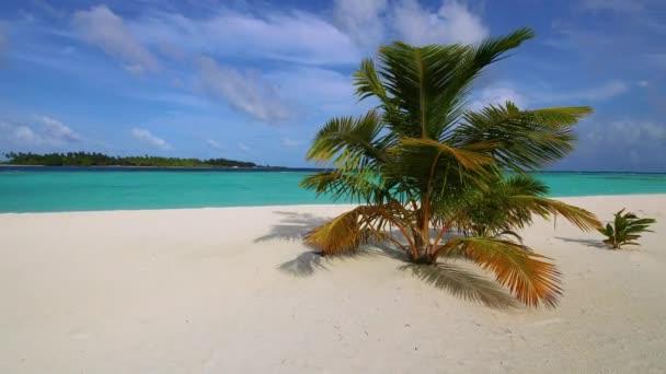 Sandy beach na Maledivách s palmy a bílý písek
