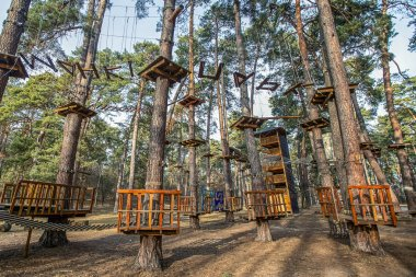 rope park in pine forest for adults and children's entertainment, - image