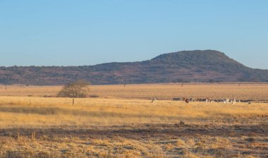 Winter farmland in the Midlands region of kwaZulu-Natal province of South Africa image in landscape format with copy space