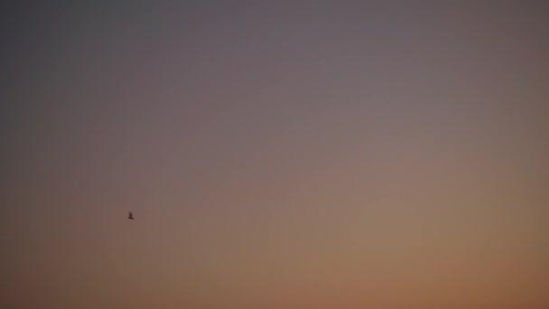 Zeitlupe, Fledermaus fliegen gegen Nachthimmel