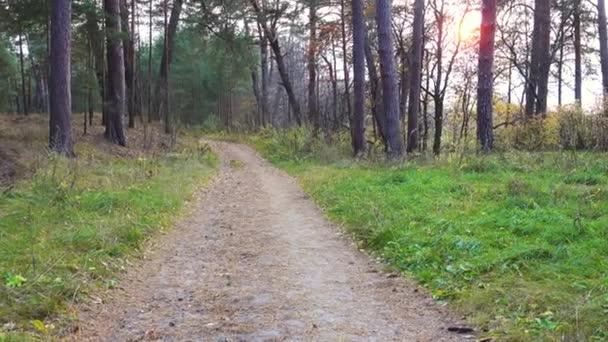 Krásný východ slunce v podzimním lese, jeřáb natáčení.