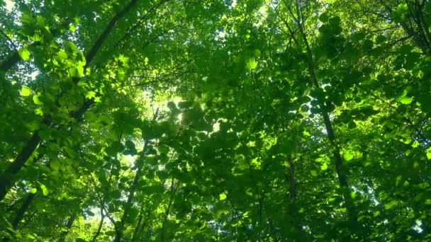 Slunce přes zelené listy.