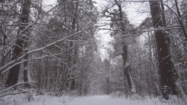 Krásné zimní les, stromy které čerstvý sníh.
