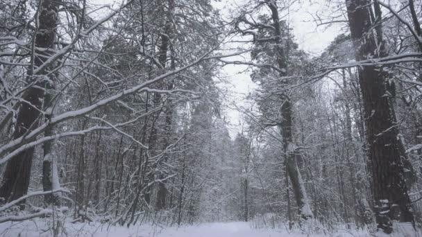 Pomalý pohyb sněhu v nádherém lese.