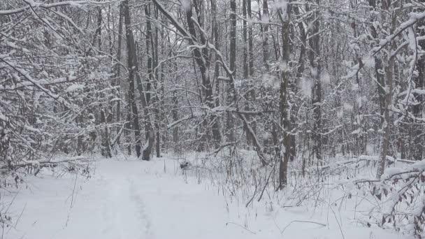 La neve cade nella bellissima foresta invernale.